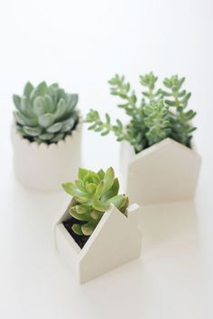 Can I find room on a window sill for these?