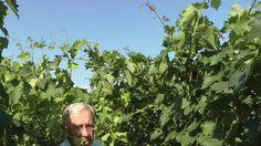 Летняя чеканка виноградных лоз