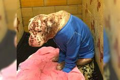 Cachorro abandonado que fue picado por cientos de abejas está irreconocible después de darle una segunda oportunidad #viral