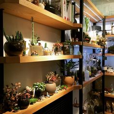 Bitkiler, hafta sonu ziyaretiniz için en iyi duruşlarıyla poz veriyorOur plants are giving their best pose for your weekend visit. #bekleriz #dükkan #sutopya #kadıköy #moda #istanbul #plantlove #plantaddiction #localshop #shop #shopdesign #decoration #weekend #happyweekend
