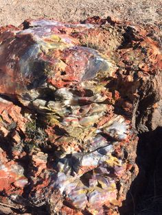 Petrified Wood in the Petrified Forest National Park, Arizona. Petrified Forest National Park, Best Campgrounds, Petrified Wood, Wood Creations, Arizona, National Parks, America, Pictures, Photos