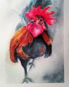 #rooster #watercolor #watercolorpractice #watercolorsketch #animal #doodle #drawing  #illustration #artofinstagram