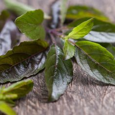 10 Holy Basil Benefits: Tulsi Helps Anxiety, Acne & More by @draxe #Treatingthyroidnaturally