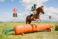 Carrot Cross Country Jump - Rebecca Farm