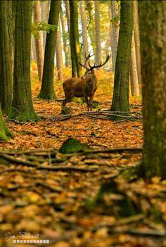 The Greenman, Cernunnos /Herne the Hunter... By Artist Unknown...