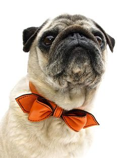 40 Top Products from I Want That, Season Three: The Martini BowTie Collar from LuxeMutt provides that touch of sophistication for the discerning pooch. The BowTie is available in black-tie black as well as a variety of colors, and is crafted from all-natural leather with nickel-plated hardware.  See the video. From DIYnetwork.com