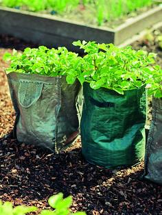 Pěstujeme zeleninu v pytlích | Chatař & Chalupář