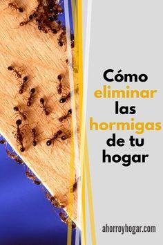 ¿Las hormigas se han apoderado de cierta área de tu casa? Este es un problema común que afecta a todas las casas. Las hormigas son un insecto que puede convertirse en una verdadera molestia si no se cuida adecuadamente. Cleaning Routines, Pest Control, Houses, Home