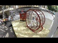 How far will human lab mice go for Fantastic Delites? - Delite-o-matic #Guerrilla #Marketing