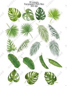 New Tree Leaves Painting Leaf Art Ideas Tropical Leaves, Tropical Flowers, Tropical Plants, Tropical Art, Tropical Garden, Diy Flowers, Watercolor Plants, Watercolor Leaves, Palm Tree Crafts