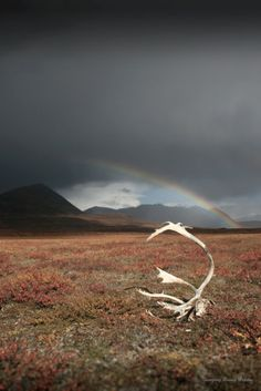 Arc....Alaskan Fine Art Photography by SalmonberryThoughts on Etsy