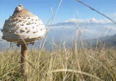Edible mushroom #nature #piemonte #italy #provinciadicuneo