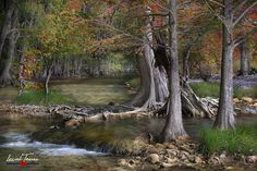 Autumn is a magical time on the Blanco River in Wimberley. Photographic Prints: Photographic prints are available in two finishes – matte and glossy. Matte prints look great in all types of lightin… Texas Photography, Amazing Photography, Country Wall Art, Texas Hill Country, Types Of Lighting, Autumn Trees, Nature Photos, Art Nature, Photographic Prints