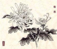 Oriental Flowers, Chinese Flowers, Japanese Flowers, Botanical Drawings, Botanical Illustration, Chinese Drawings, Art Drawings, Japanese Chrysanthemum, Chrysanthemum Flower