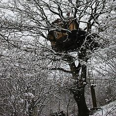 Redefining tree-houses. Low-impact housing: http://www.simondale.net/house/index.htm