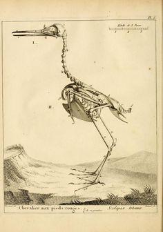 v 1 - Traité élémentaire et complet d'ornithologie, ou, Histoire naturelle des oiseaux / - Biodiversity Heritage Library