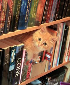 """Were you looking for a book?"""