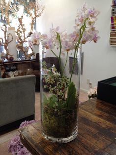 terrarium-style orchid