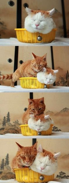 Humor Train - Funny Pictures, Pic Dumps, Animals and GIFs.: Cute Animals (25 Pics)