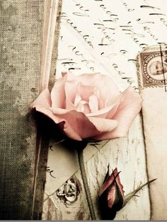 ~roses and letters and post cards fall to the floor...