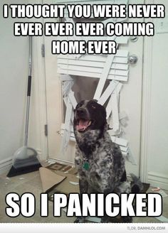 This is totally my dogs........lol