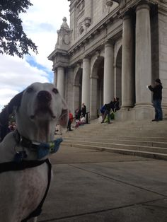 Harley at the Basilica in Minneapolis - annual blessing of the animals.