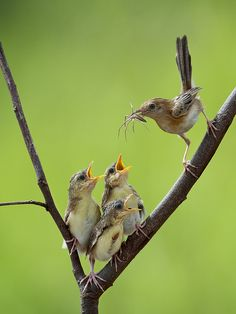 Idk why I think this pic is cute! Momma bird feeding her babies all natural organic food!
