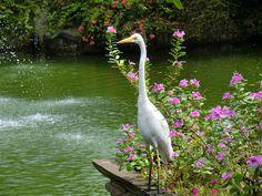 The bird at resort lagoon.