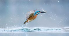 Stunning Finalists Of The World Wildlife Day Photography Competition #inspiration #photography