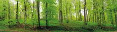 Fototapete schön grün (Nr. 5584)  www.berlintapete.de