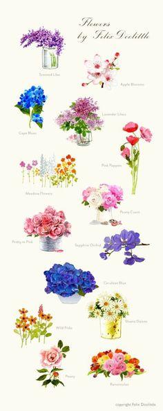 【绘画素材】手绘彩铅花卉素材Felix Doolittle