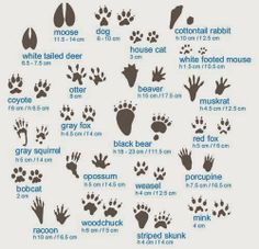 Animal tracks guide - good to know while camping and RV Living Camping Survival, Survival Tips, Survival Skills, Survival Quotes, Bushcraft Skills, Wilderness Survival, Bushcraft Camping, Survival Watch, Bushcraft Gear