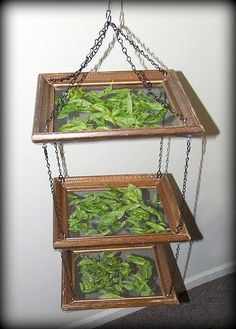 Hanging herb drying rack made of upcycled picture frames, screening, and chains.