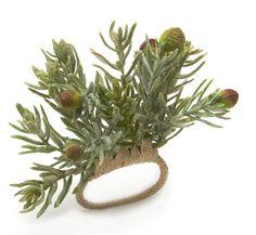Deborah Rhodes Napkin Ring Succulent Pine - Deborah Rhodes - Napkin Rings - Tabletop http://shopatbellissimo.com/