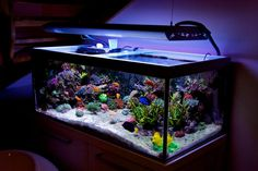 See more in the All Things Aquaria board: https://www.pinterest.com/JibinAbraham/all-things-aquaria/ Reef Aquarium