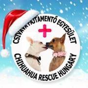 Csivava Fajtamentő Egyesület karácsonyi logó Chihuahua Rescue Hungary Christmas