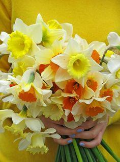 jane brocket: home-grown, hand-picked, hand-held daffodils!