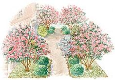SOUTHERN COURTYARD GARDEN PLAN;  Featured plants include crape myrtle, camellia and periwinkle.    The Southern Courtyard plan is a four-page, 699KB pdf file. It includes the full-color garden scape shown above, an overhead plan, a plant list with heat- and cold-tolerance zones, tips on caring for the plants, planting blueprint plan, and a construction tip.