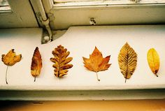 Leaf collection. Don't forget to display!