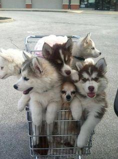 #cute#puppies#adorable