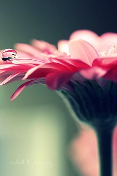 Lovely Macro Pictures by Coral Hall -