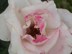 #photo #photography #photographer #flower #flores #flor #rosa #rose #pink #tumblr #foto #fotografia