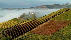 La Stampa - La classifica del Wine Enthusiast: il Piemonte nella top ten mondiale dei viaggi tra vigneti e cantine