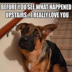 Animal Funnies ! | Animal and pet articles