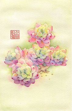 ❋ Aquarelle - Watercolor - Aquarela ❋ Succulents Drawing, Watercolor Succulents, Watercolor Cactus, Easy Watercolor, Watercolor Sketch, Watercolour Painting, Watercolor Illustration, Watercolors, Succulent Tattoo