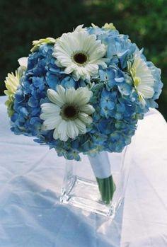 blue hydrangeas, white gerber daisies