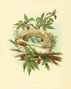 Bird nest art Vintage Bird Print Nature print by AntiqueWallArt, $10.00