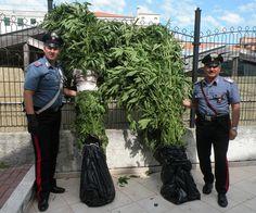 Scoperta dai Carabinieri una serra con 270 piante di cannabis