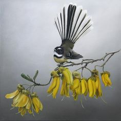 JANE CRISP New Zealand Art, Nz Art, Maori Art, Kiwiana, Wildlife Art, Art Festival, Bird Art, Beautiful Birds, Rock Art