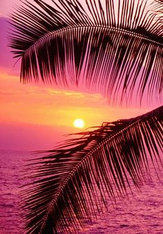 """passionplenty:  """"  Palm trees and ocean at sunset, Hawaii by John Warden on Getty Images  """""""